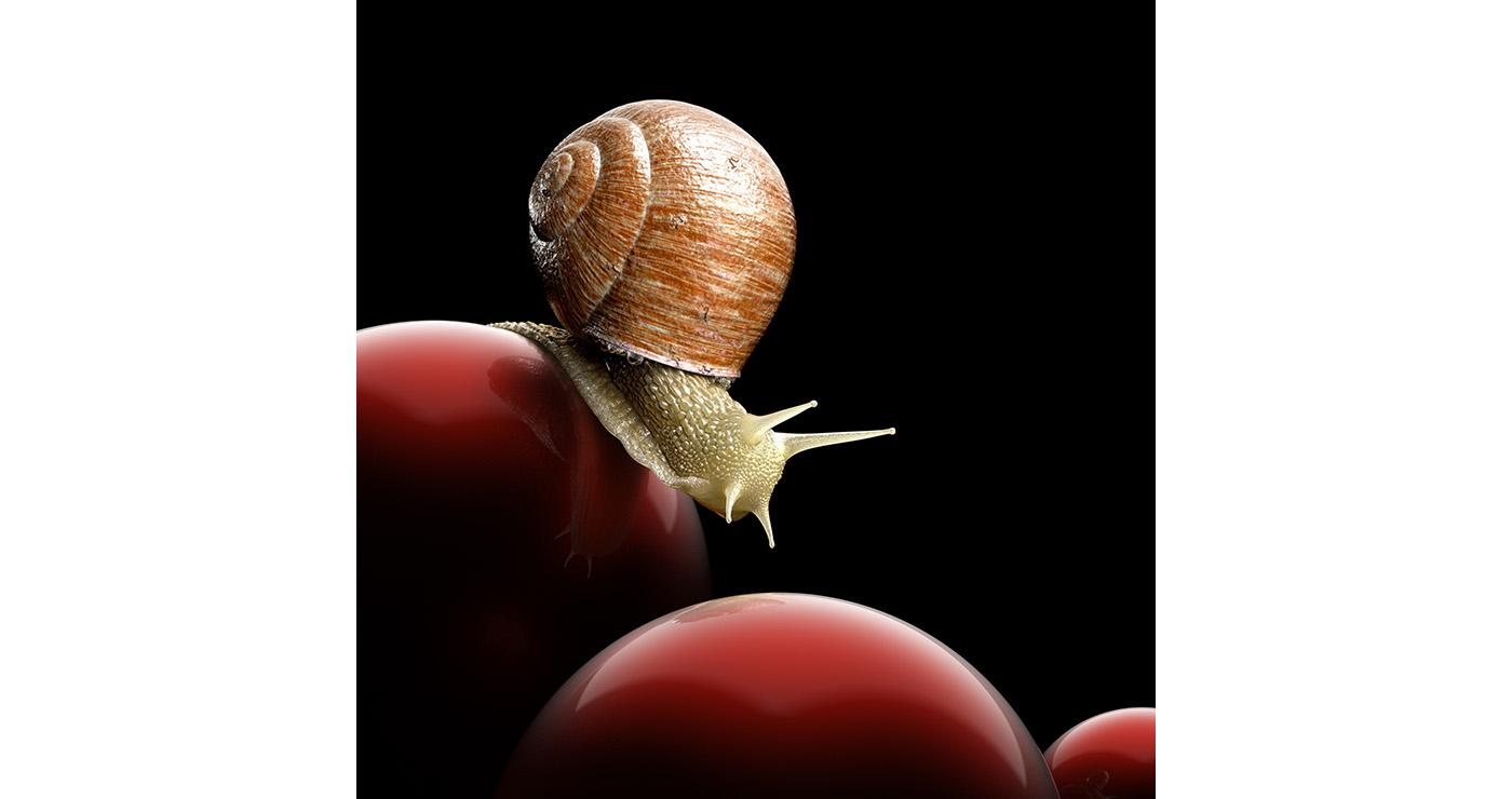 illustration-3D-philippe-raimbault-escargot-animal-11