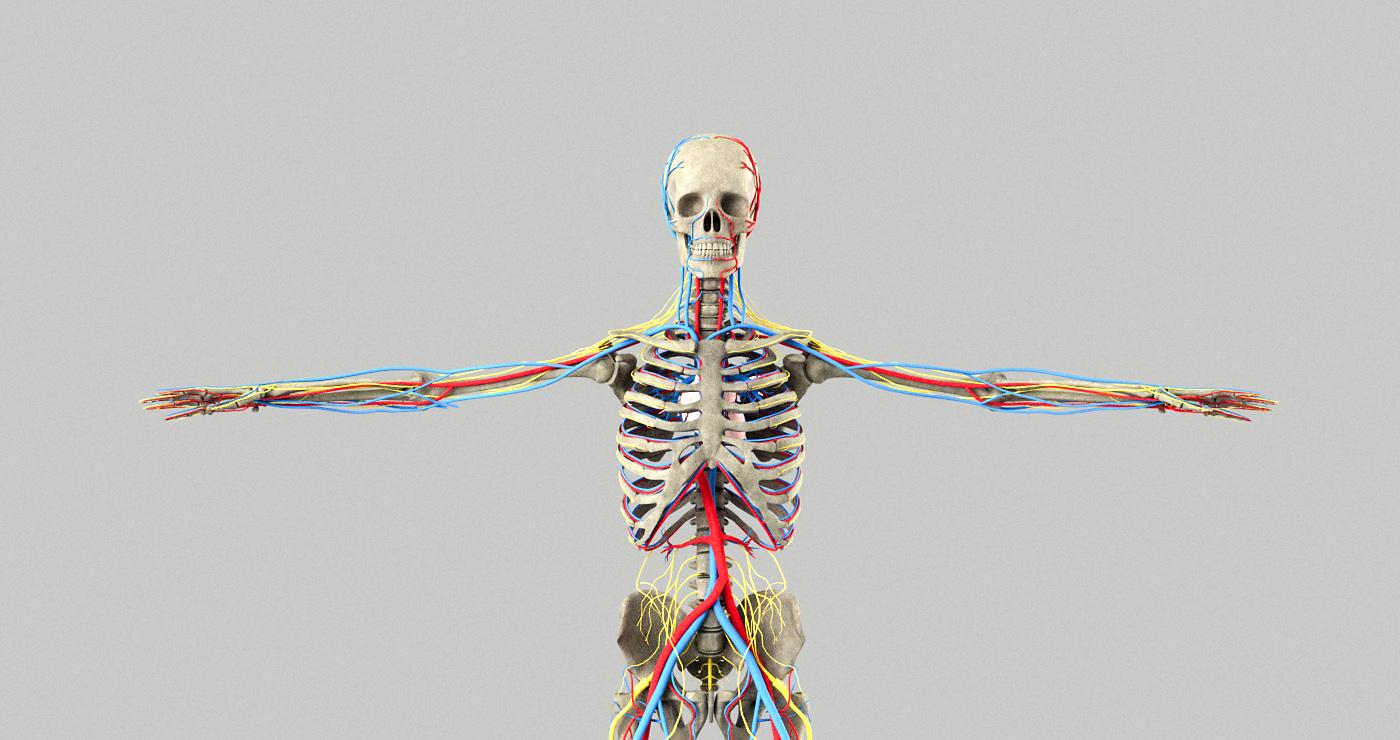 philippe-raimbault-3d-squelette-medical