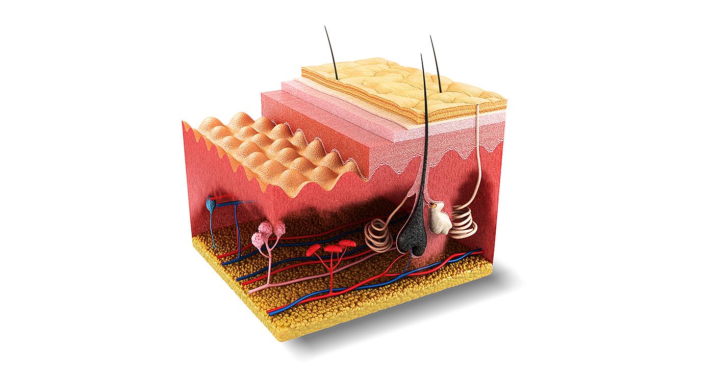raimbault-philippe-3d-lexpress-coupe-peau-medical