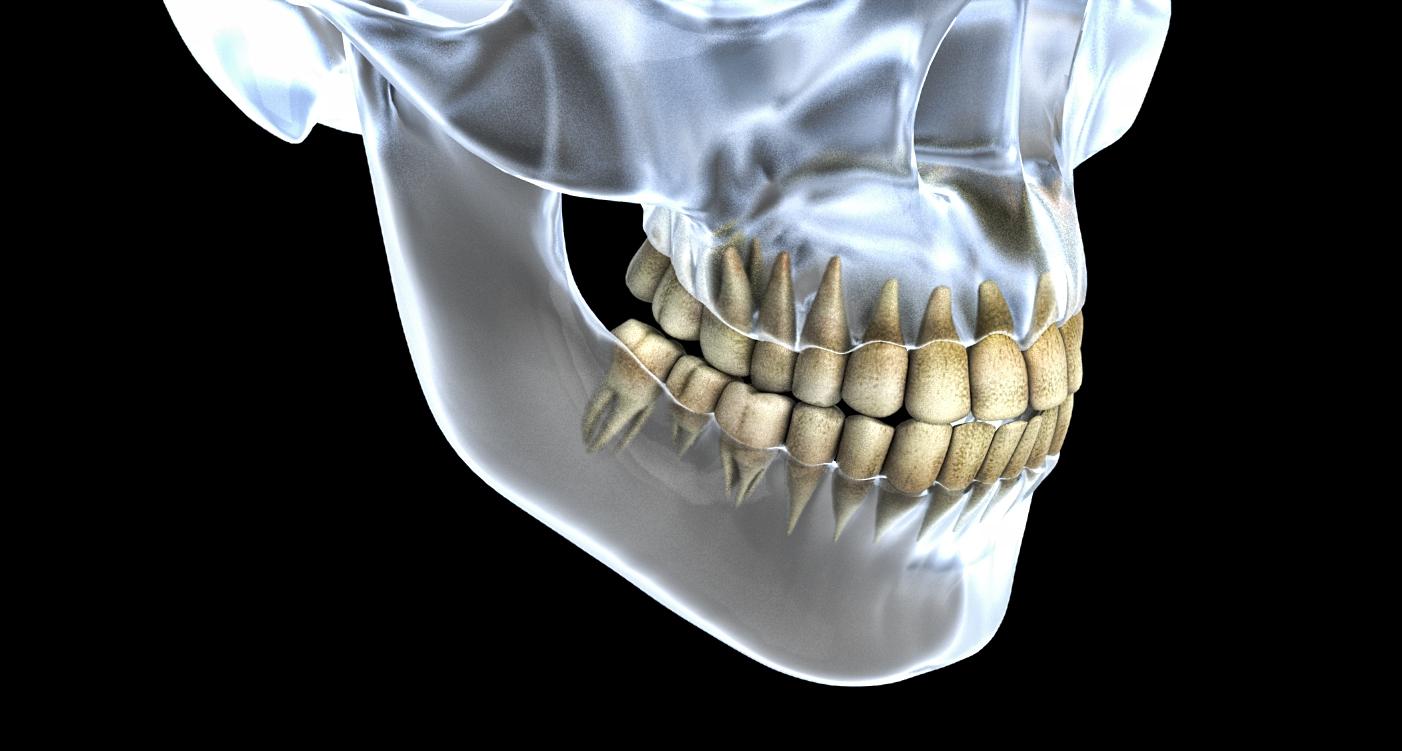 raimbault-philippe-illustration-3d-médical-dents
